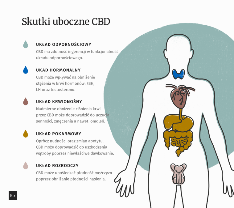 Skutki uboczne CBD w zależności od układu pokarmowego, krwionośnego, odpornościowego oraz hormonalnego
