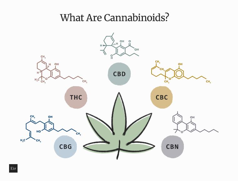 What Are Cannabinoids: CBD, THC, CBN, CBC, CBG